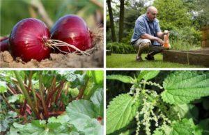 naravna pomoč rastlinam