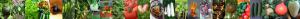 Tomappo vegetables banner
