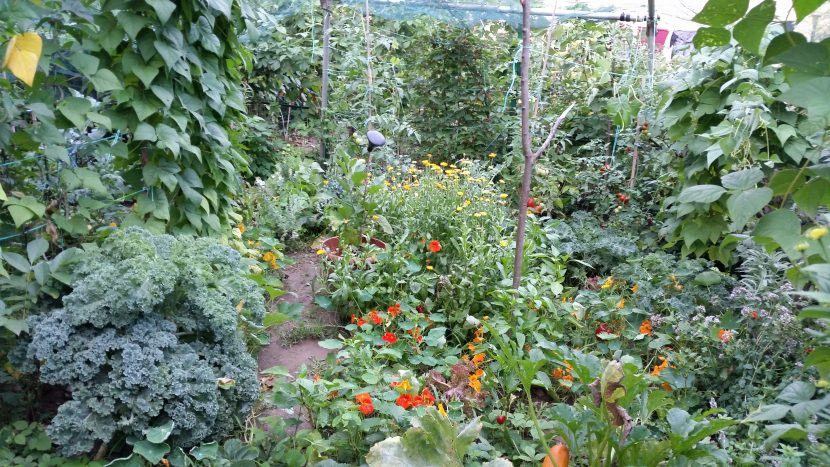 Intercropping in practice