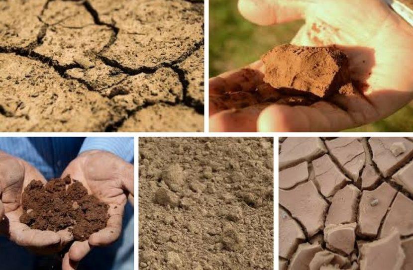 vrste tal