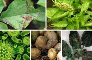 bolezni rastlin