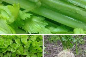 vzgajanje zelene