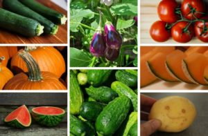 vzgajanje plodovk
